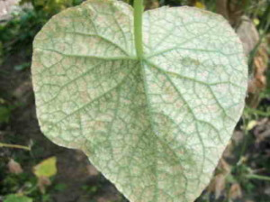 Паутина на листве