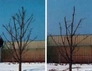 Деревце на даче