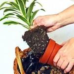 Высокие растения высаживаем на задний план