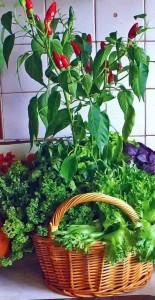 Маленький огород