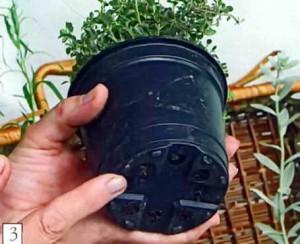 Выставите в чемоданчик травы в маленьких рассадных горшках