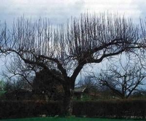 Растущее в саду дерево
