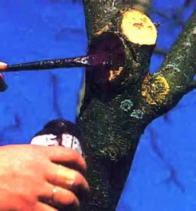 Обработка ран дерева