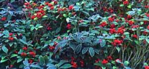 Яркое цветение в саду
