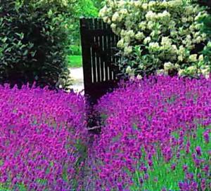 Кустарники в цвету