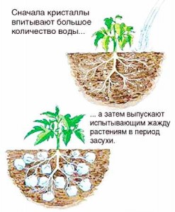 Удерживание влаги в почве