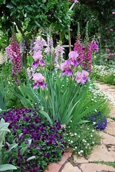 Разнообразие цветов на садовой клумбе