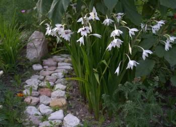 Украшение садовых дорожек при помощи цветов
