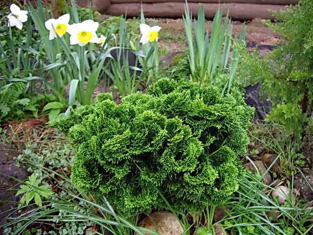 Оригинальное растение в саду