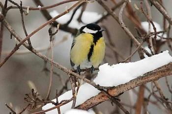 Развесьте кормушки для птиц