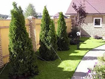 Крупномеры на садовом участке