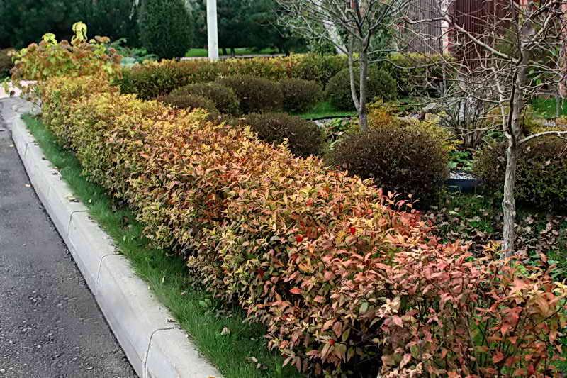 Садовый участок осенью