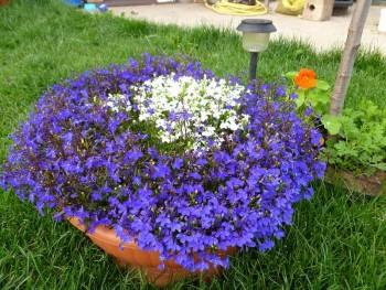 Красочная клумба в саду