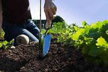 Работы с землей на огороде