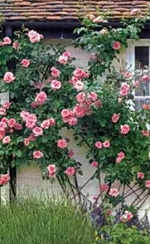 Украшение загородного дома цветами