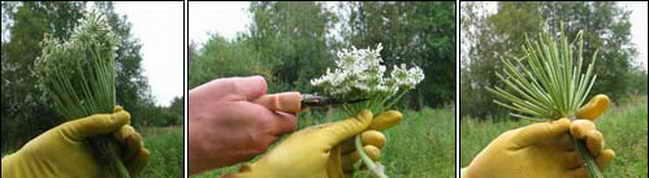Избавление от растения