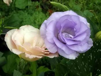 Красивый окрас цветов