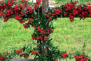 Декоративное растение в саду