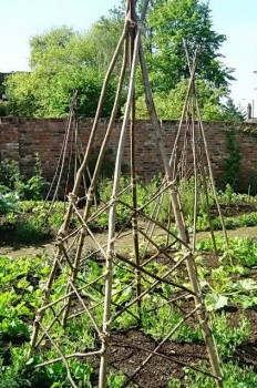 Пирамиды для помидорных кустов