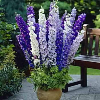 Красивые садовые цветы в горшках
