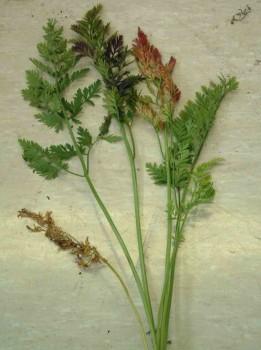Заболевание растения