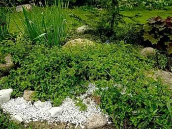 Зеленый уголок на приусадебном участке