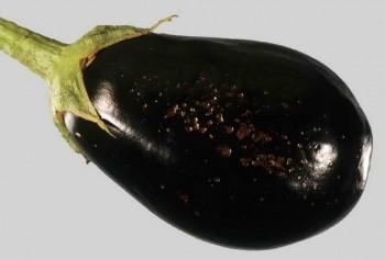 Мягкая гниль плодов