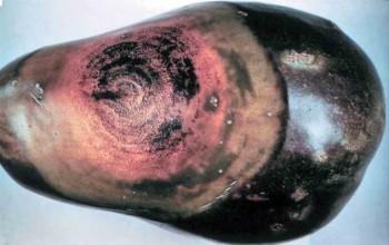 Развитие болезни на баклажане