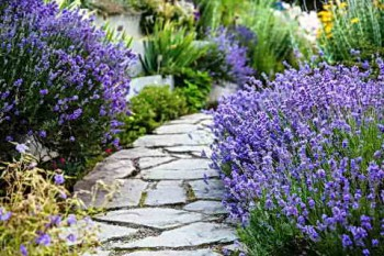 Садовая тропинка в цветах