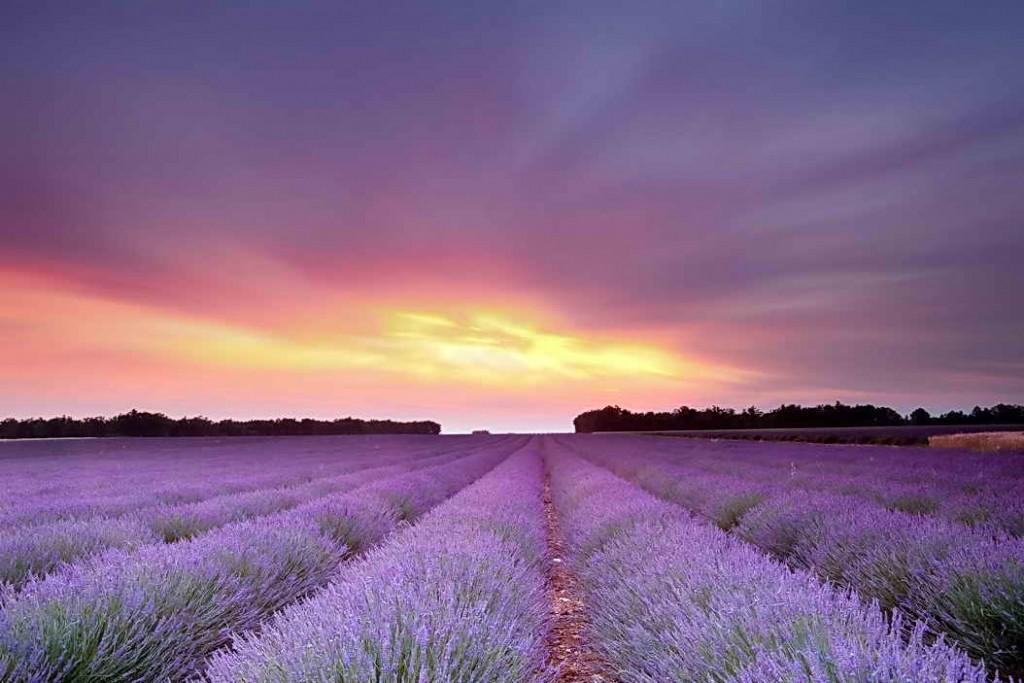 Лавандовое поле на фоне заката