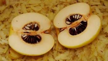 ajva-japonskaja_semena