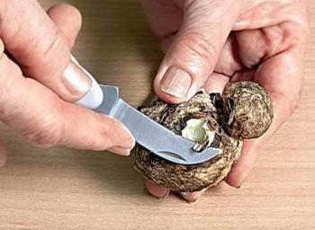 Подготовка клубня каллы
