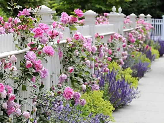 cveti_vdol_zabora