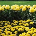 защита цветов от морозов