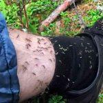 как уменьшить налет комаров на даче