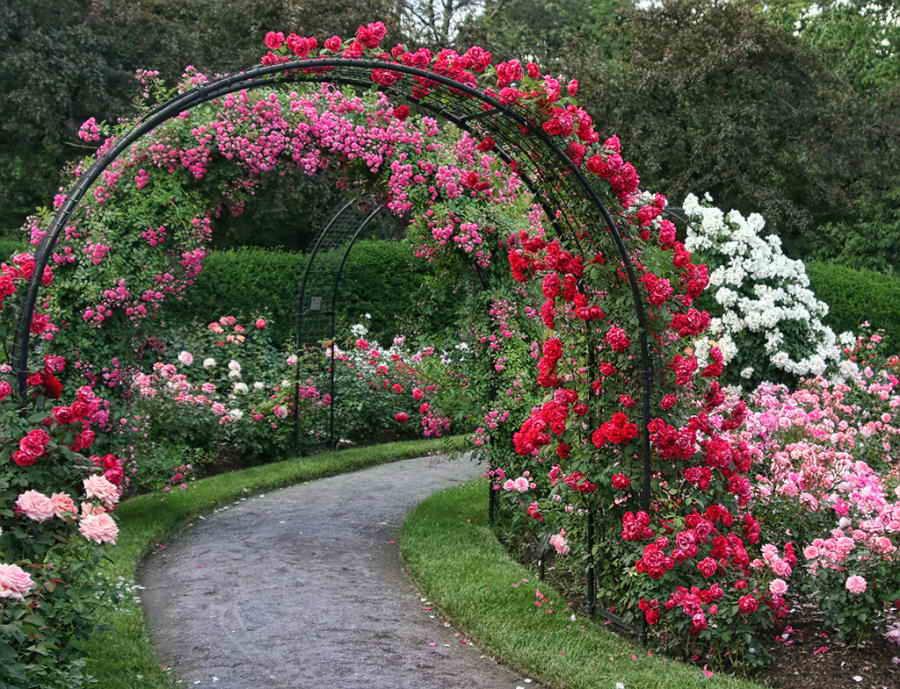 Опоры для розы своими руками