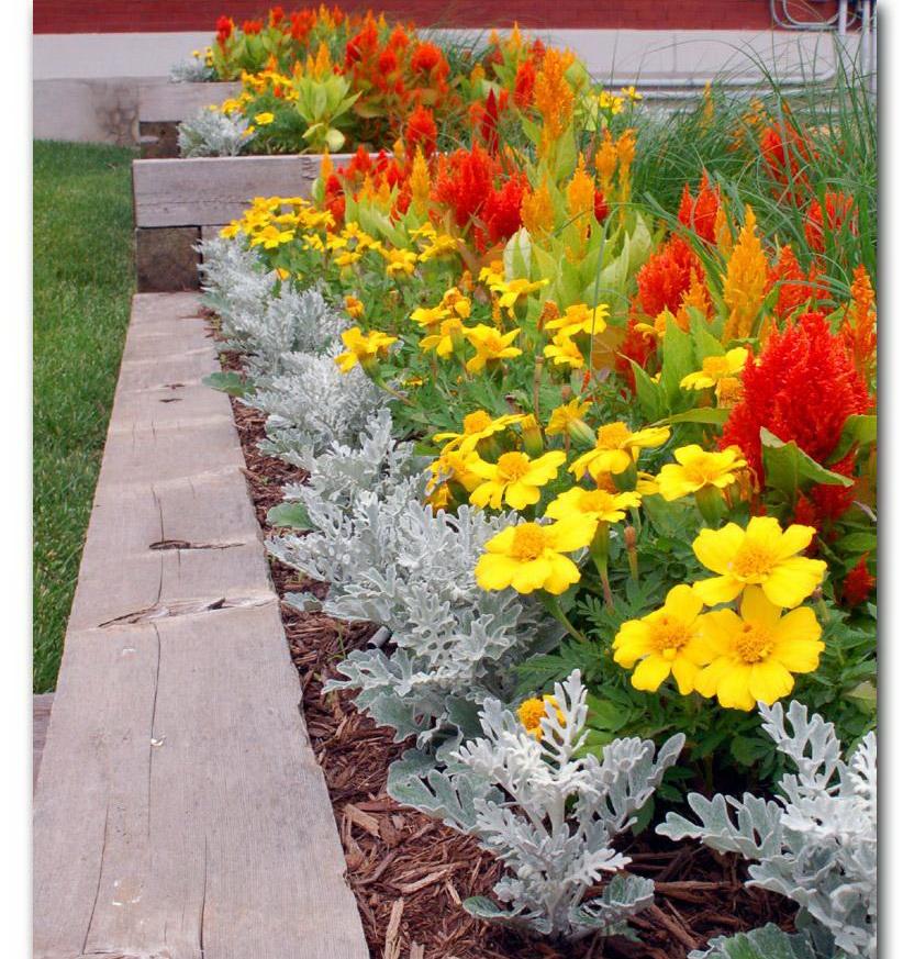 Какие цветы посадить на даче на севере