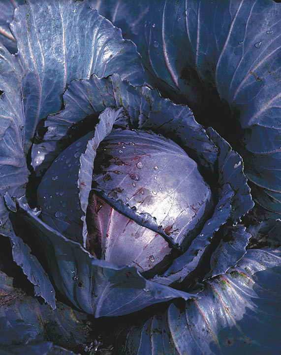 Консервированная пекинская капуста - пошаговый кулинарный