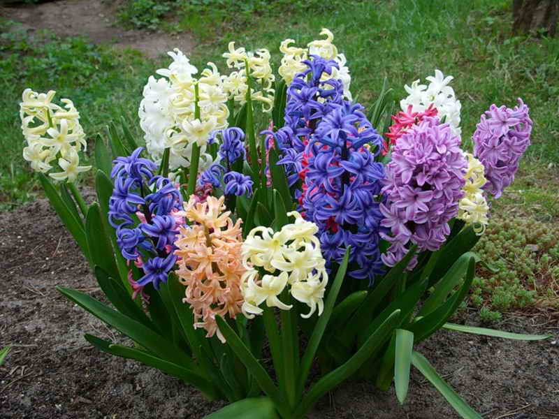 Цветы посадка и уход в домашних условиях