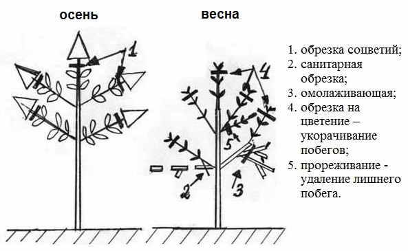 metelchataya_obrezka