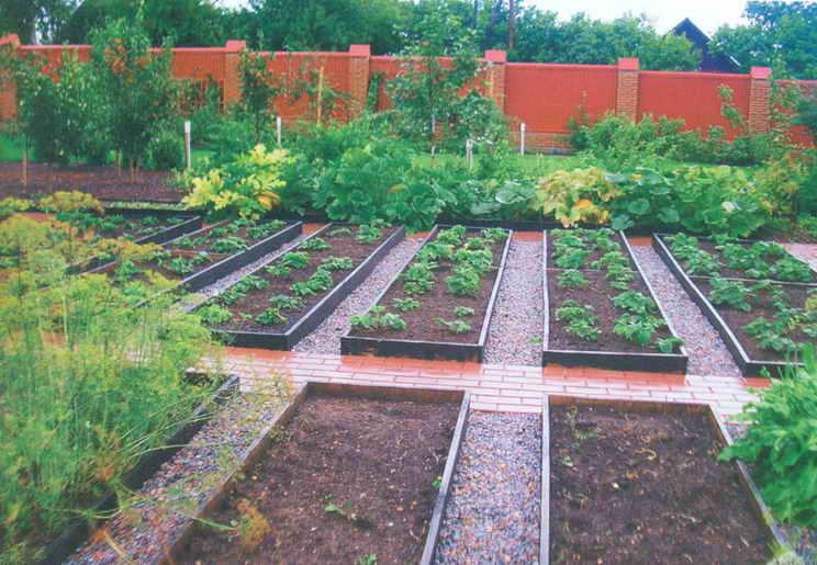 планировка огорода на даче фото