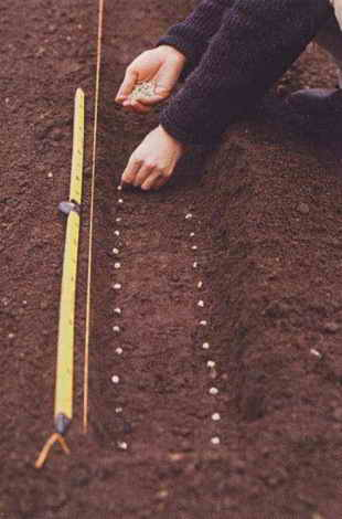 Лук и морковь: сажаем и сеем под зиму. Мастер-класс из личного 94