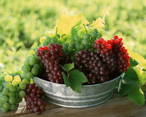 grozdya_vinograda