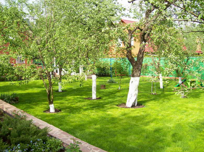 Фруктовый сад свои руками