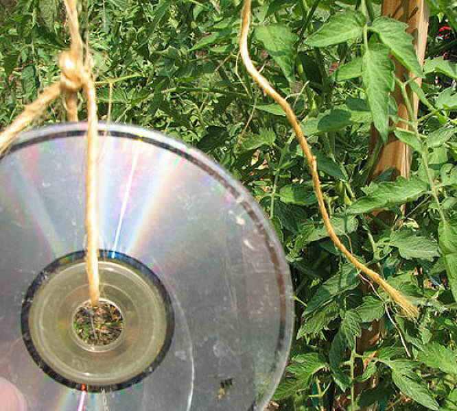 Пугало от птиц своими руками из дисков 99