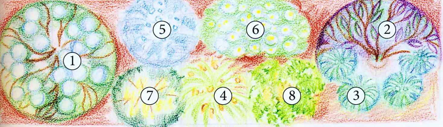 Схема цветника 7 х 2 м
