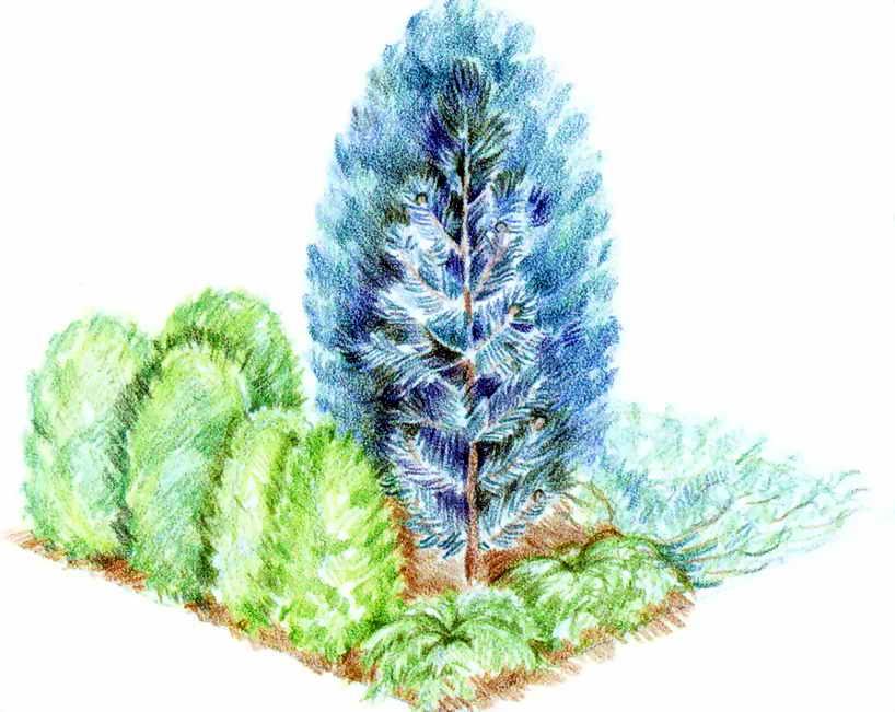 Самое крупное растение этой
