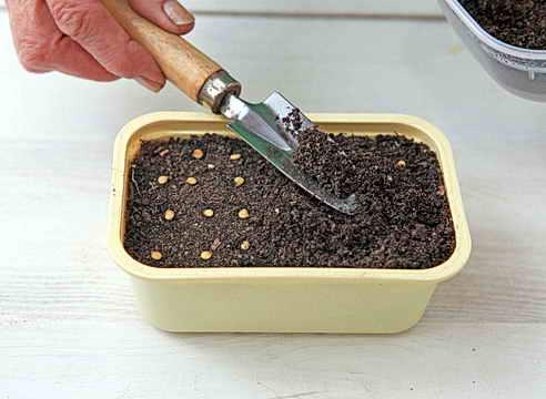 Выращивание рассады перцев домашних условиях