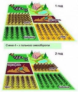Сівозміну овочевих культур на дачній ділянці таблиця