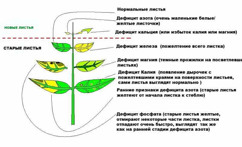 Некроз фосфорный